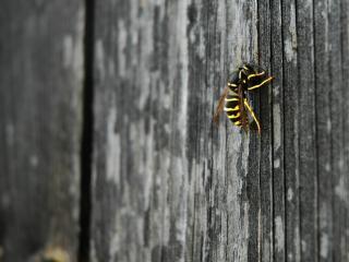 обои Пчелка на деревянной оградке фото