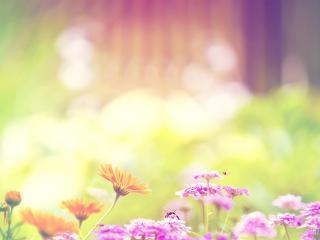 обои Пчелы опыляют летние цветы фото