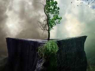 обои для рабочего стола: Распускается росток после дождя