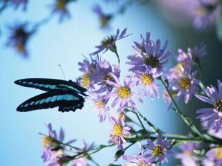 обои Бабочка на цветочной веточке фото