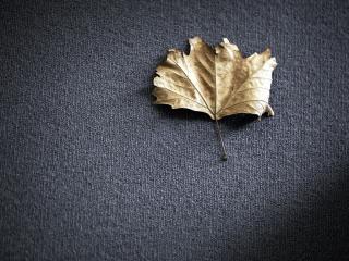 обои Сухой листок на сером фото