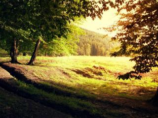 обои Красивый густой лес фото