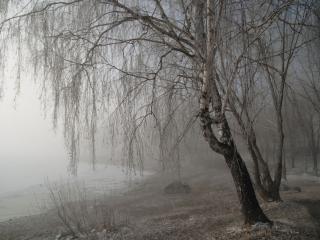обои Берег в тумане фото