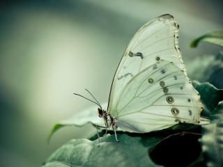 обои Белая бабочка на листе фото