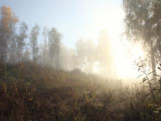 обои Октябрьский туман фото