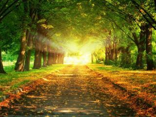 обои Залитая утренним солнцем красивая аллея фото