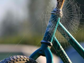 обои Паук сплел паутину на велосипеде фото