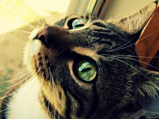обои Красивая кошка охотится за мухами на окне фото