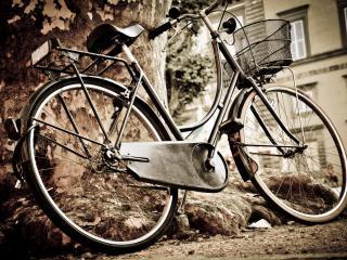 обои Ретро велосипед прислонен к большому дереву фото