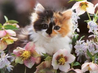 обои Котёнок в цветах фото