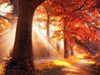 обои Осенний свет фото