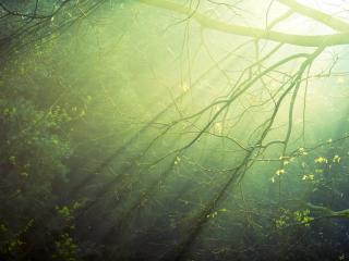 обои Лучи солнца в изумрудной зелени фото