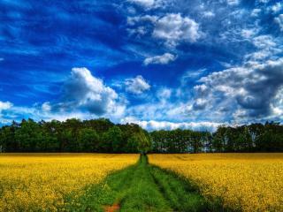 обои Синее небо над желтым полем и дорогой фото