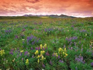 обои Небо,   горы и цветы фото