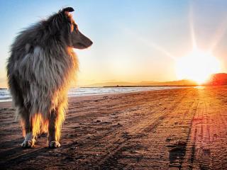 обои Собака смотрит на солнце фото