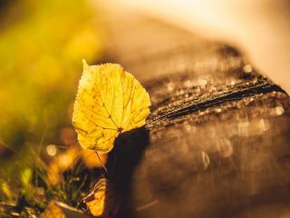 обои Осенний листик на бордюре фото