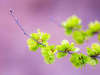 обои Весеннее пробуждение природы фото