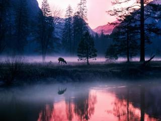 обои Туманное утро в северном лесу, горы фото