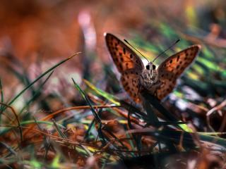 обои Бабочка на листьях травы фото
