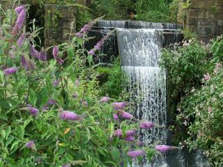 обои Водопад и сирень фото