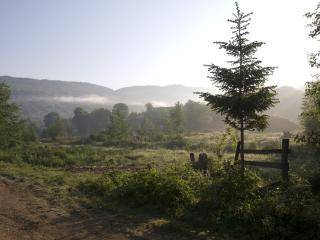 обои Утро в туманной росе фото
