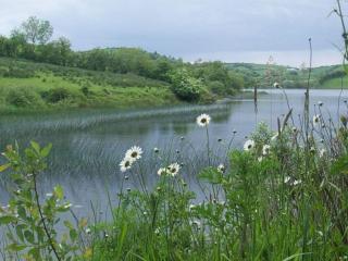 обои Летний пруд и ромашки фото