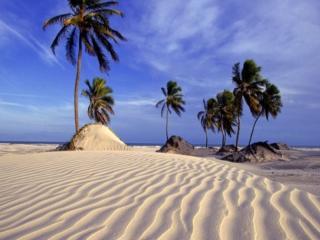 обои Барханы,   пальмы и море фото
