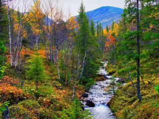обои В багрец и золото одетые леса. фото