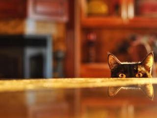 обои Заглядывающая кошка фото