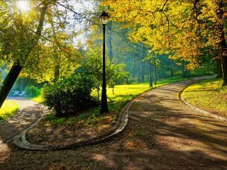 обои Осенние парковые дорожки фото