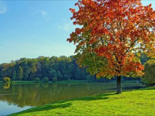 обои Осенний клён у пруда фото