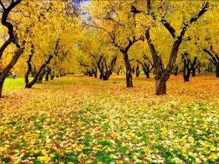обои Осенний яблоневый сад фото