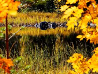 обои Осенняя Прелесть фото