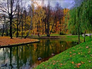 обои Осень,   а ивы зелёные фото
