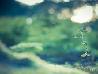 обои Размытость фона и зеленый побег фото