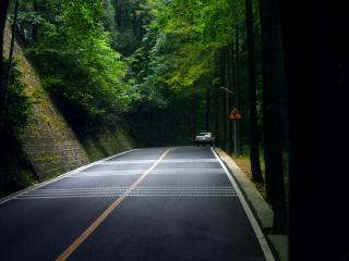обои Хорошее покрытие дороги лесной фото