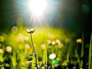 обои Цветут растения летом и блики света фото
