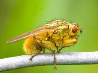 обои Зеленая муха фото