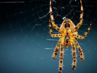 обои Желтый паук на паутине фото