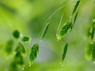 обои Капельки росы на листве фото