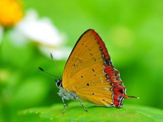обои Желтая бабочка с окантовкой на зеленом листике фото
