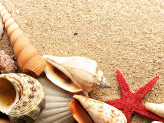 обои Морские ракушки и звезда на берегу фото