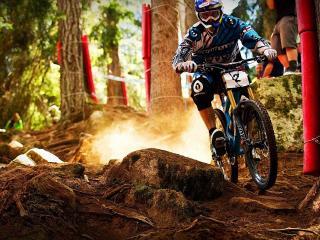 обои Велосипедист штурмует лесную полосу препятствий фото