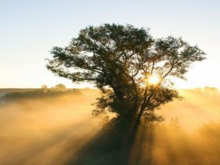 обои Дерево, солнце и туман фото