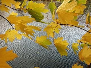 обои Осенний ветер фото