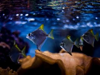 обои Маленькие рыбки фото