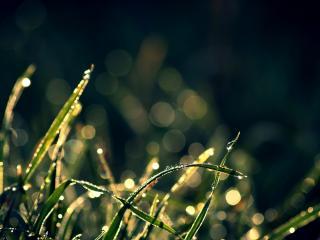 обои Блики на утренней траве с росой фото