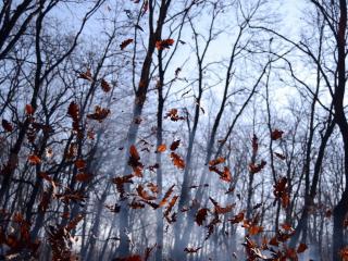 обои Ветер осыпает последнюю листву фото