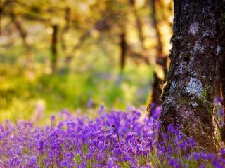 обои Красивые цветы в лесу фото