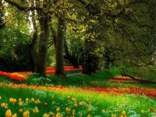 обои Красивая лужайка в парке фото